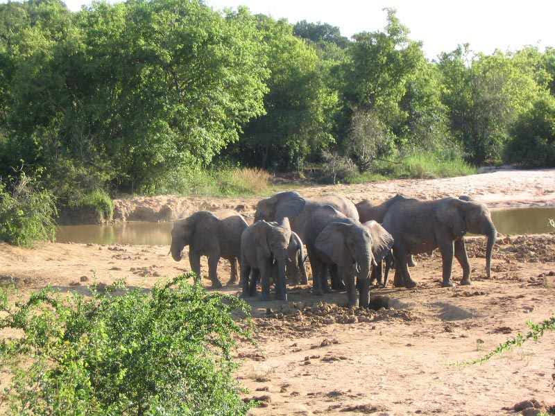 Yankari Game Reserve In Nigeria