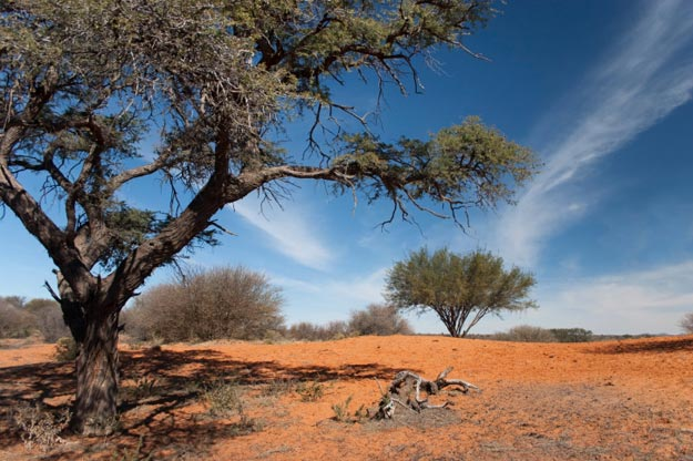 Kalahari Desert Travel Information