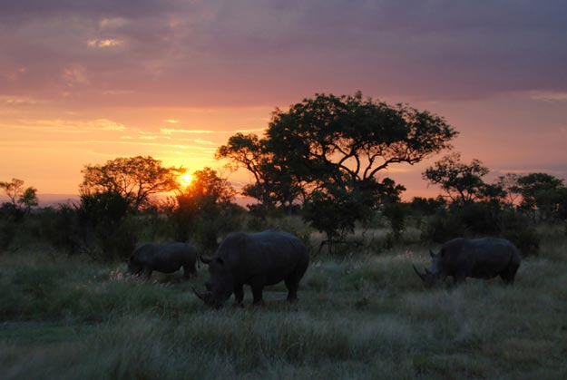 Kruger National Park In  South Africa