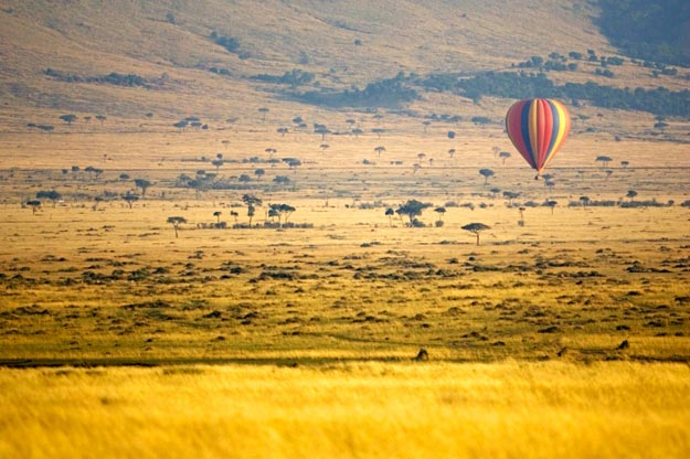 One of the most popular wildlife reserves in Africa, Maasai Mara National Reserve has thousands of visitors every year at its 1,510 square kilometers (583 square miles) of mostly undisturbed nature.