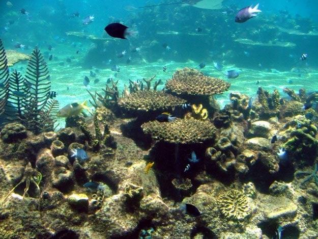 Sea World is a marine animal theme park, oceanarium and resort.