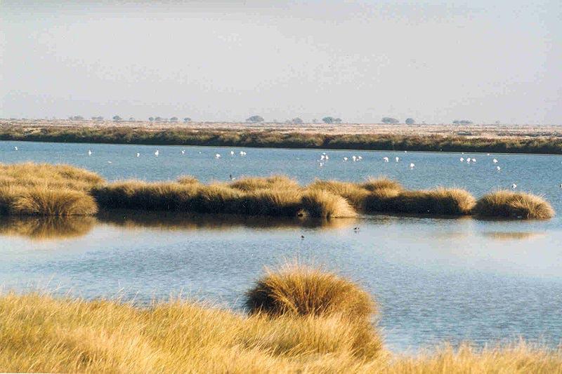 Doñana National Park image