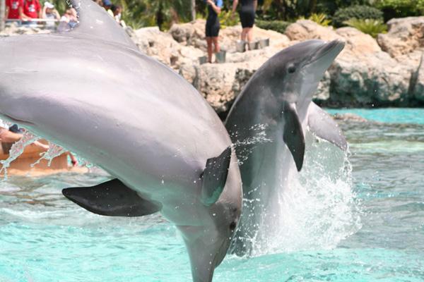 A Dolphin at SeaWorld in Orlando