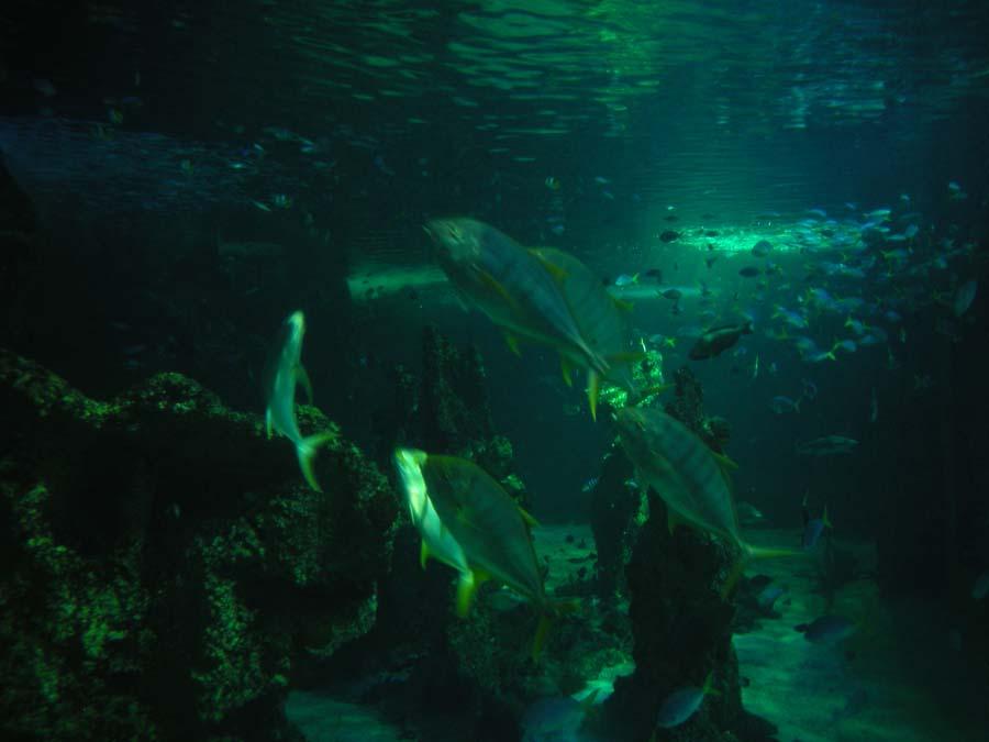 Sea Life Sydney Aquarium Location Facts Attraction