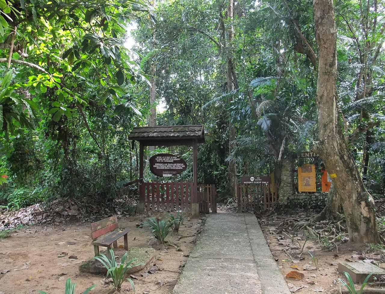 Taman Negara National Park, Malaysia - Activities ...