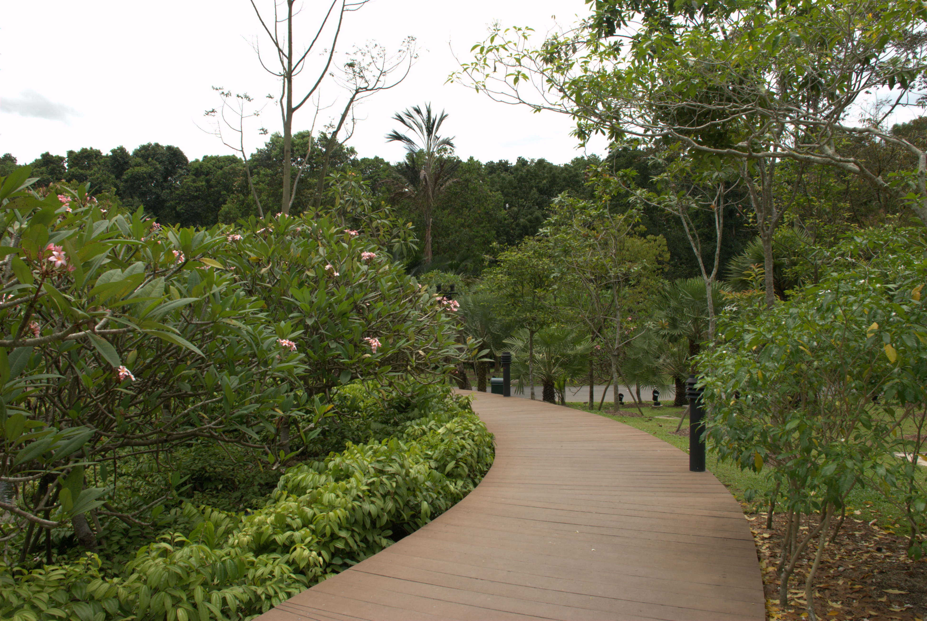 Singapore Botanical Garden Map Facts Location Best Time To Visit