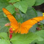 Butterfly House in Coffs Harbour