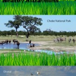Central Kalahari Game Reserve Infographics