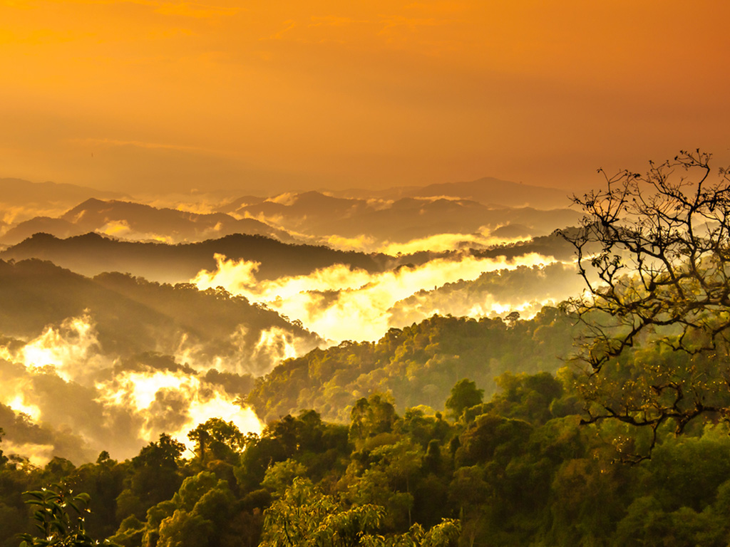 Amazon Rainforest Image