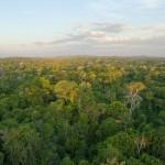 Amazon Rainforest Photo