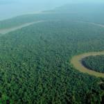 Amazon Rainforest Picture