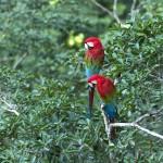 Amazon Rainforest Birds Image