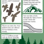 Tijuca Forest Infographic