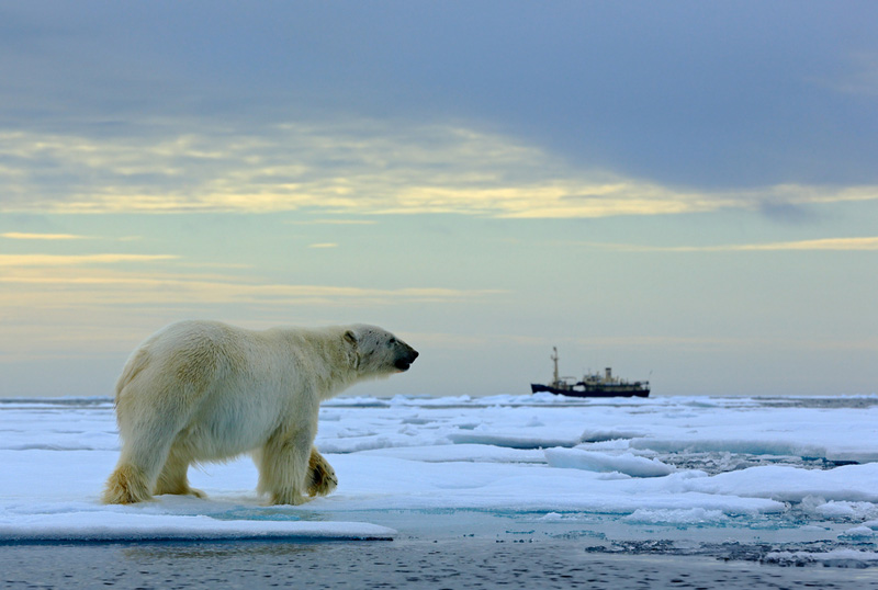 Polar Bear Tour Image