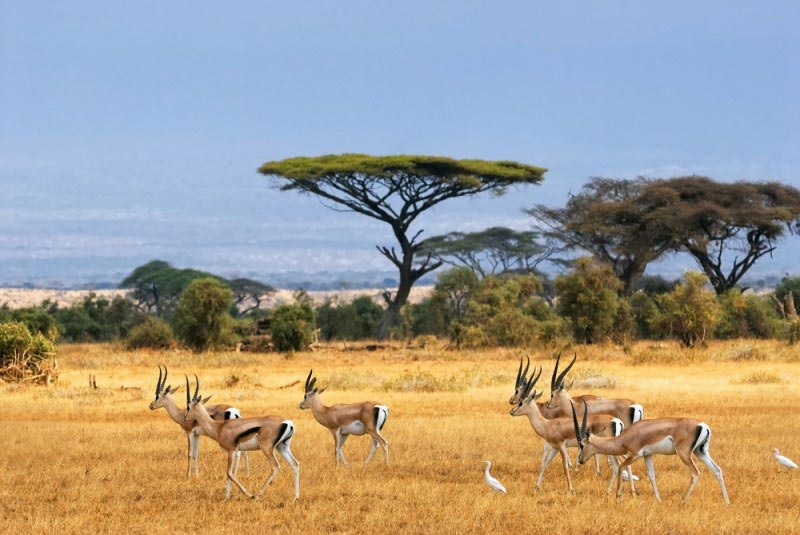 Kenya Travel Image