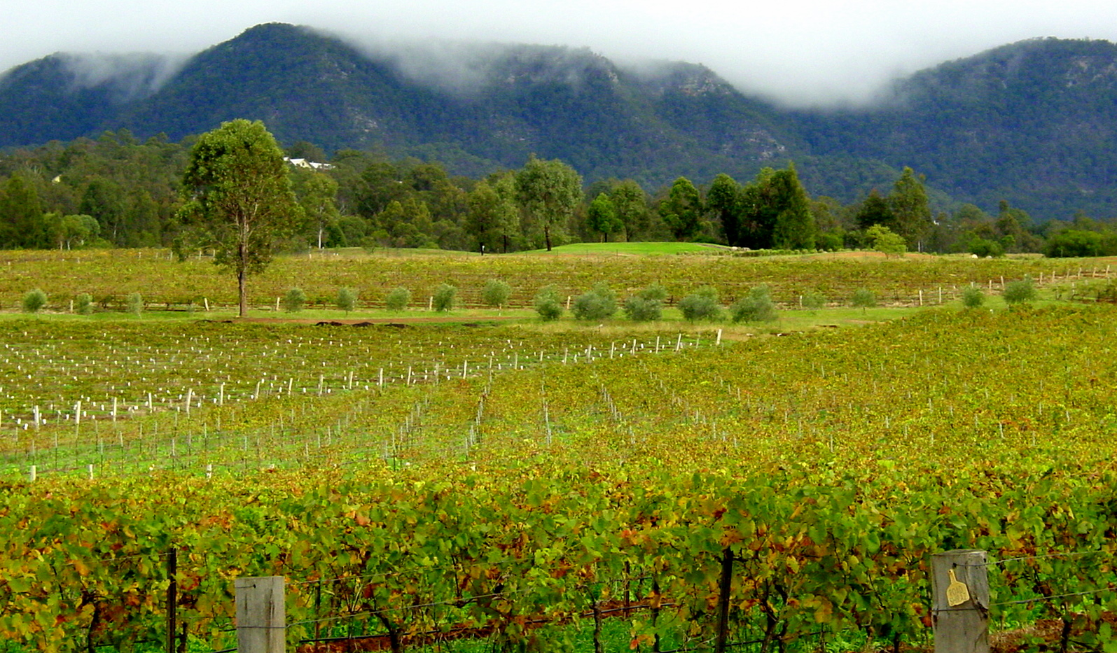 Hunter Valley in Australia