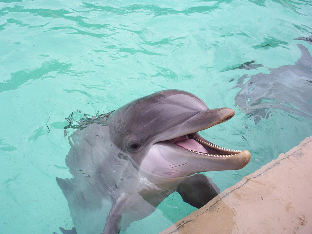 A Dolphin at SeaWorld in Orlando