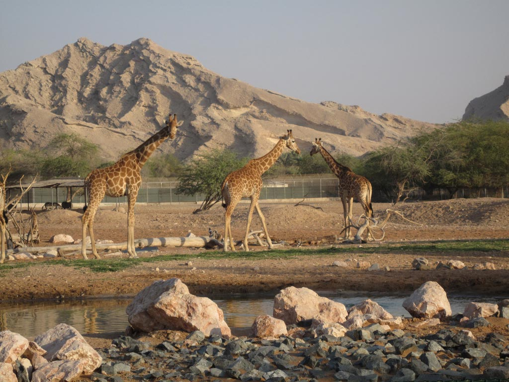 Al Ain Zoo And Aquarium Abu Dhabi Information Hours