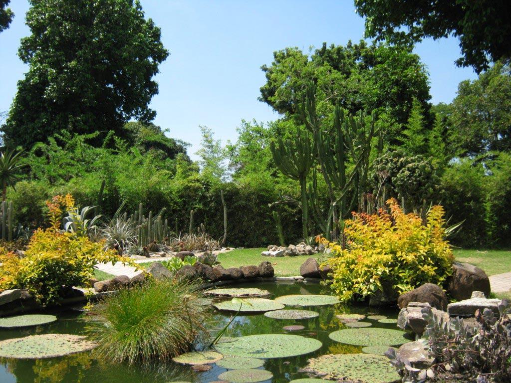 Jardim Botanico (Rio de Janeiro Botanical Garden) Travel Information