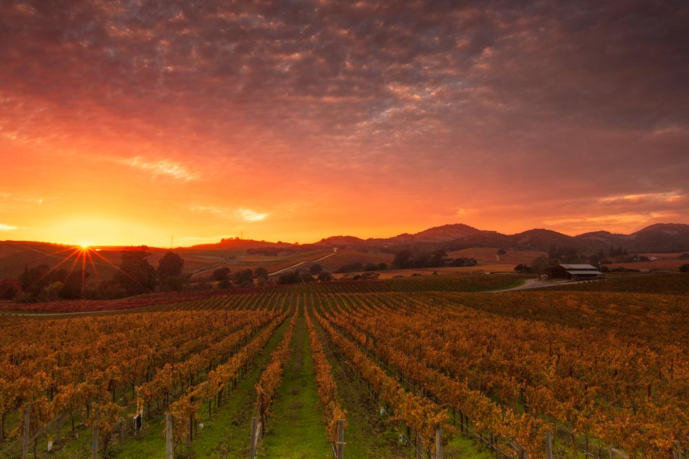 A picture of Napa Valley in California