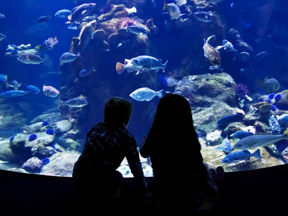 Sao Paulo Aquarium (Aquario de Sao Paulo) in Brazil