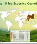 World Map Highlighting Top 10 Tea Exporting Countries