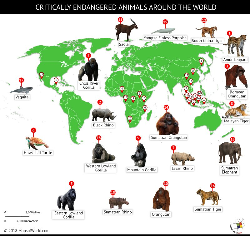 World map depicting locations of critically endangered animals