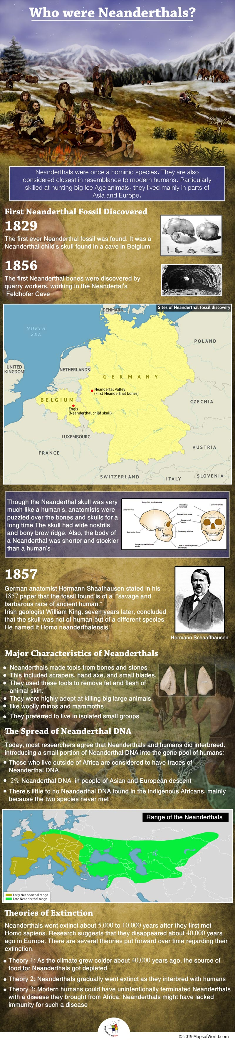 Infographic Showing Details on Neanderthals