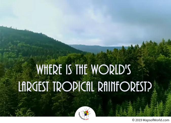 World's Largest Tropical Rainforest