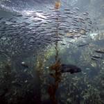 Acuario de la bahía de Monterey