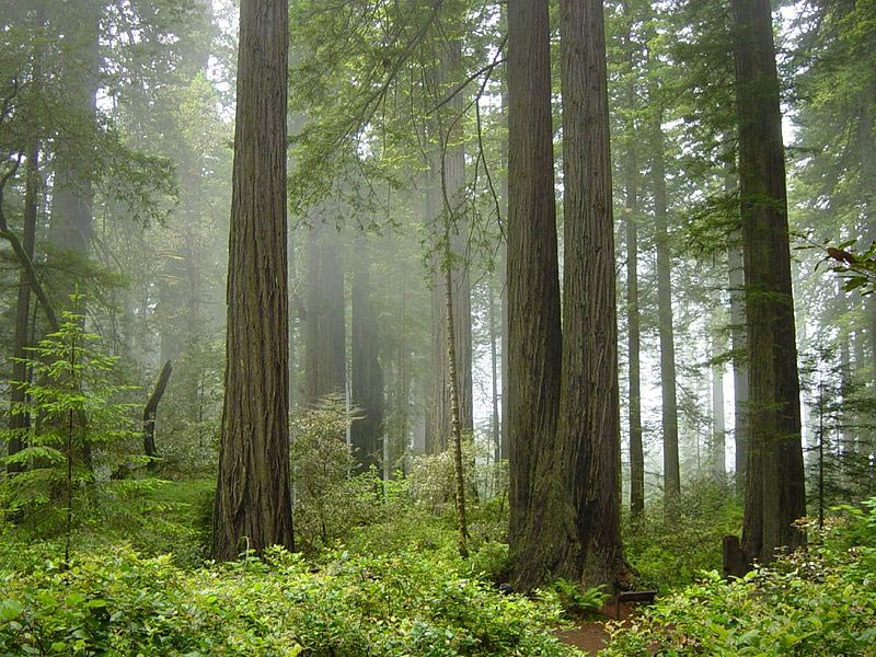 Parque Nacional Redwood y Parques Estatales