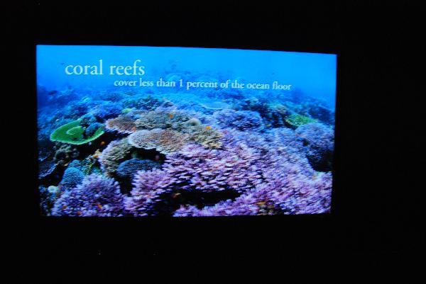 Reviews And Images Of Shedd Aquarium