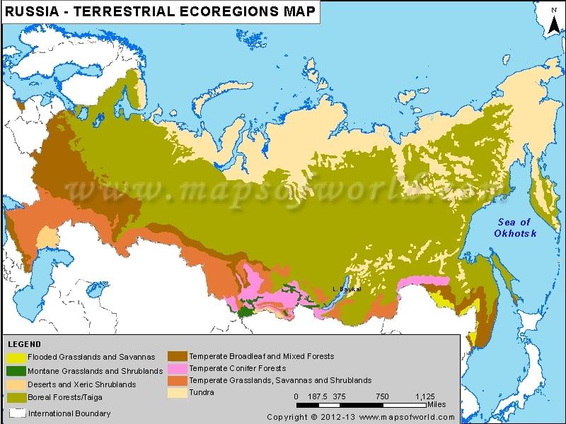 Russia Terrestrial Ecoregions Map