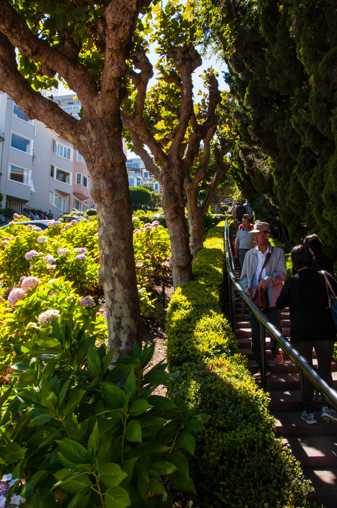 Steps down Lombard Street Image