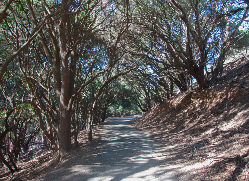Hiking and biking trail on Angel Island