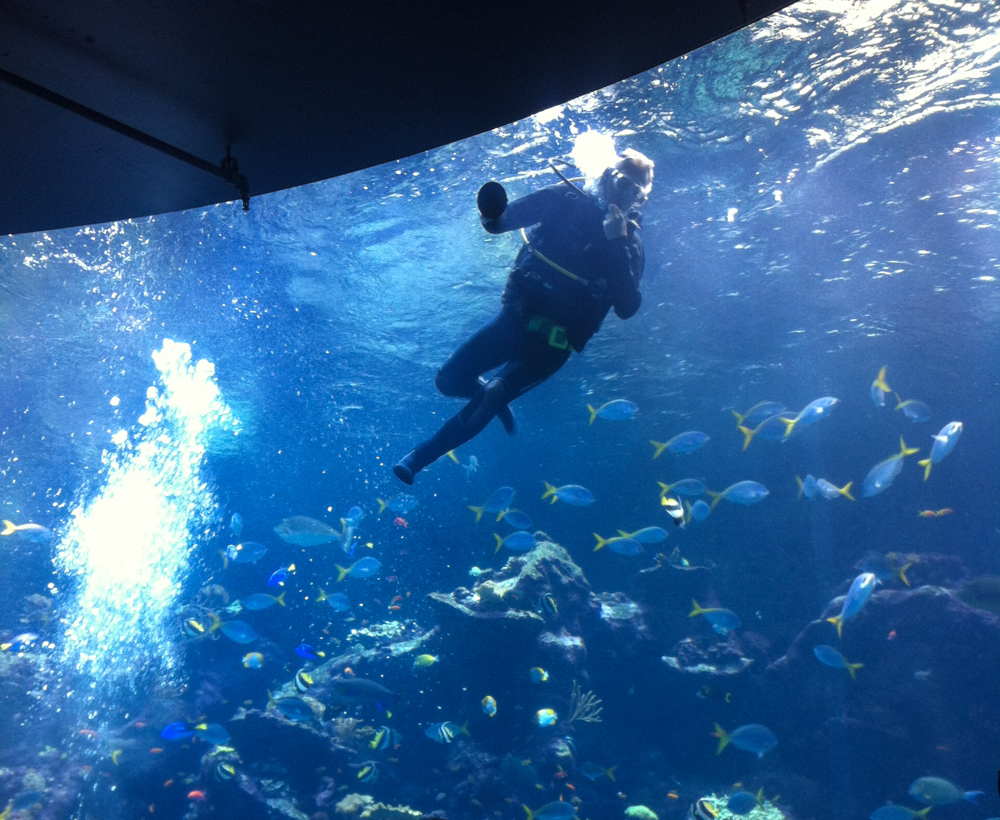 A diver cleans the aquarium walls