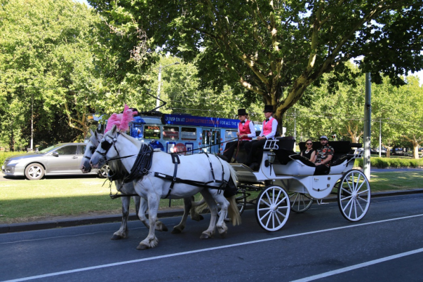 Horse Drawn Carriage, Melbourne