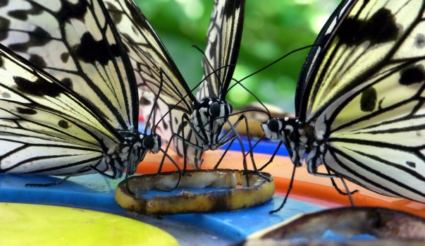 Butterfly Park at Sentosa Islands, Singapore
