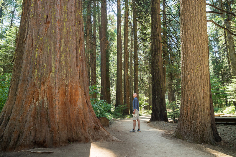Redwood National & State Parks, California