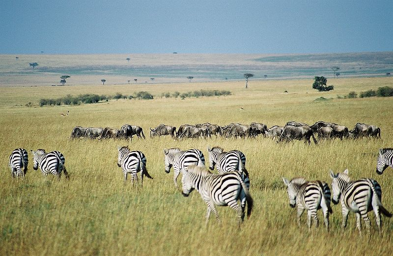 Animal Spotting at Maasai Mara