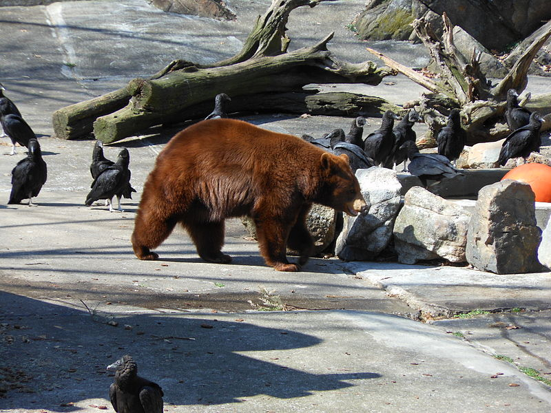 Bear Mountain Zoo