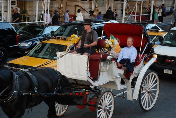 The Carriage & Horses of New York City