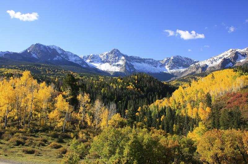 Orange aspens in Colorado