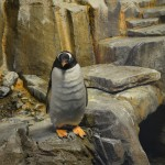Penguins at Montreal Biodome