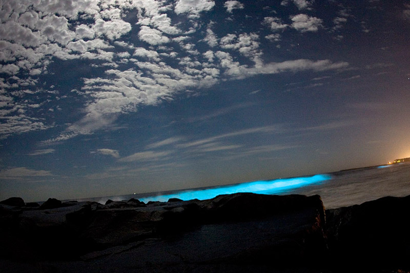 Puerto Rico (Mosquito Bay-–-glows in the dark)
