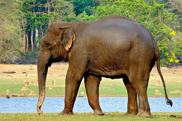 Top 6 Wildlife Destinations in Northeast India That Will Awe Every Traveler