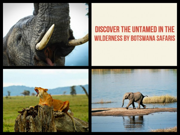 Discover the untamed in the wilderness by Botswana Safaris
