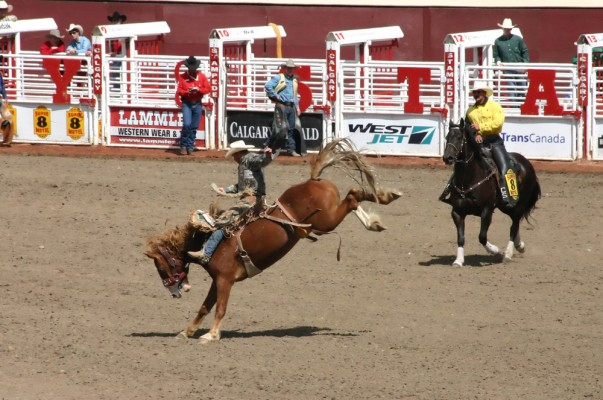 Calgary Stampede is the most awaited event in Canada