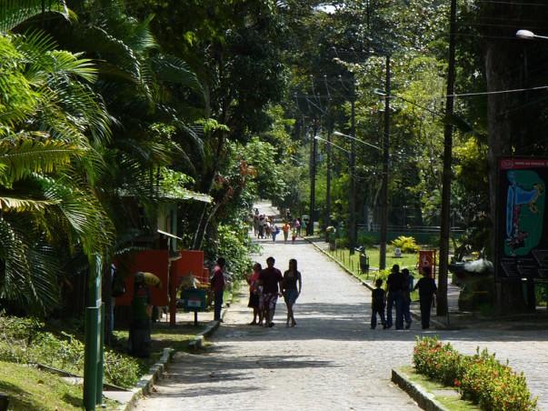 Dois Irmãos Park at Recife