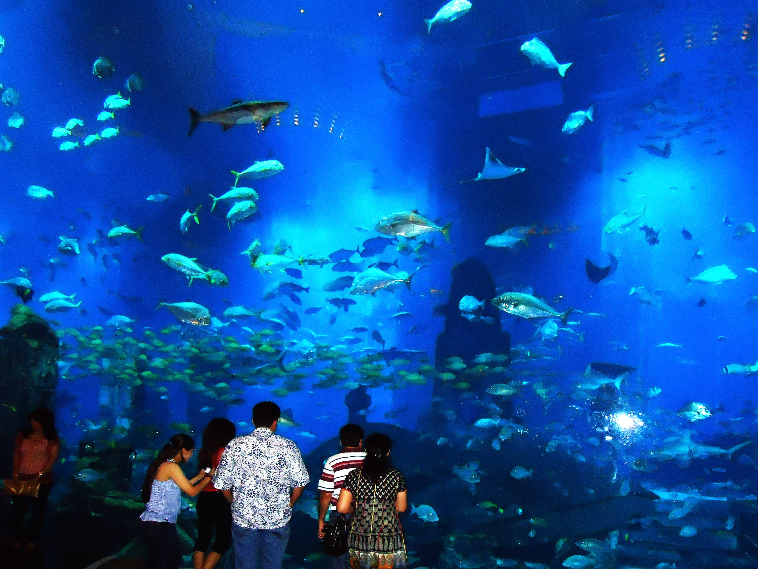 The Dubai Aquarium – World Full of Marine Wonders